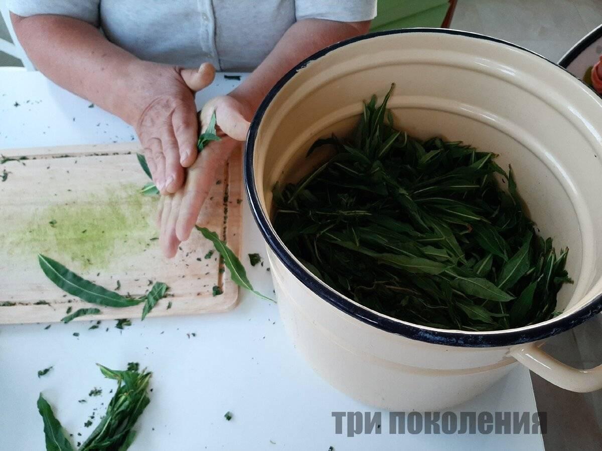 Когда собирать иван-чай и как его правильно сушить?