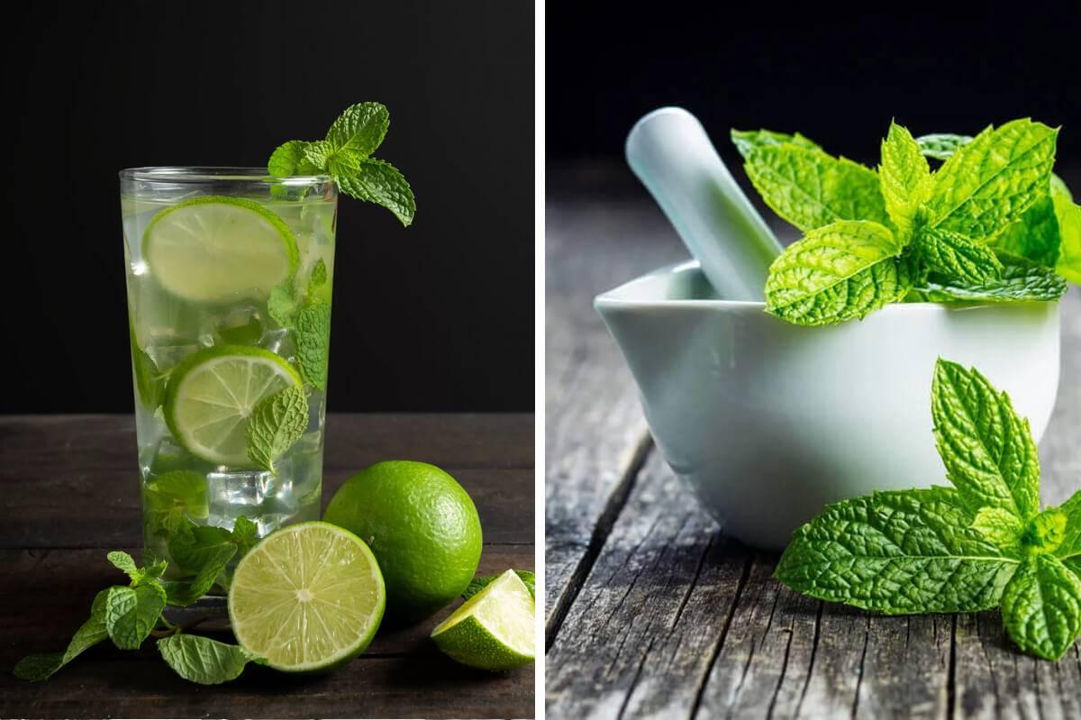 Чай с мятой польза и вред для женщин