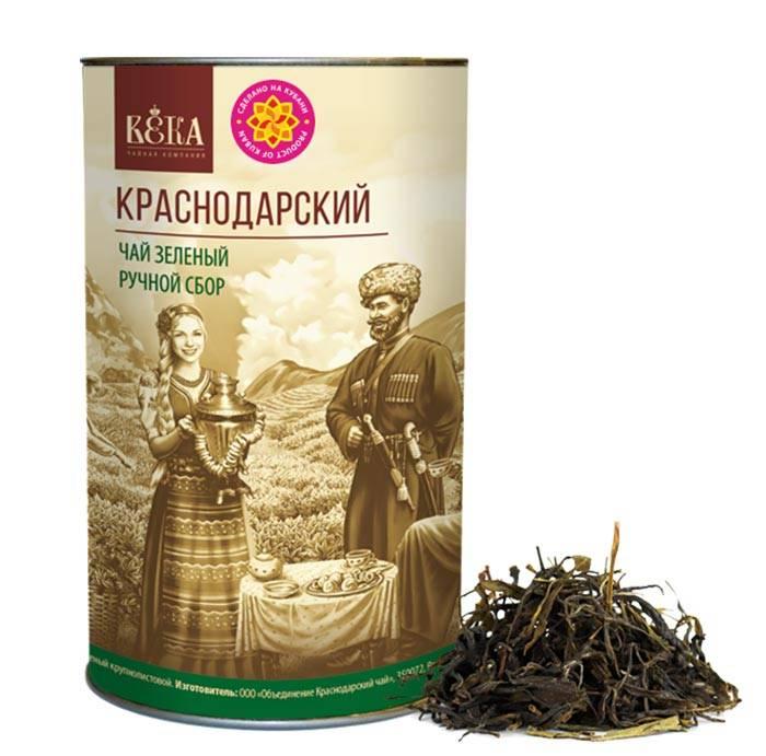 Краснодарский чай: история и современность - teaterra | teaterra
