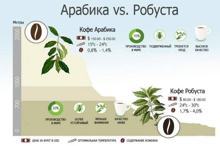 Робуста (robusta или coffea canephora)
