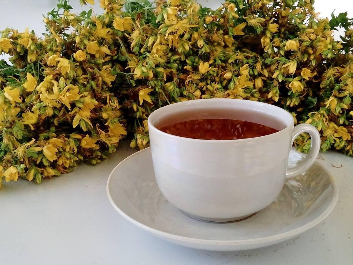Чай из зверобоя польза и вред для мужчин, женщин и детей