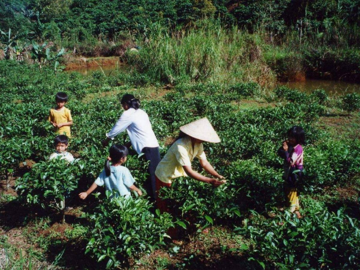 Вьетнамский кофе. список рецептов и популярных марок кофе