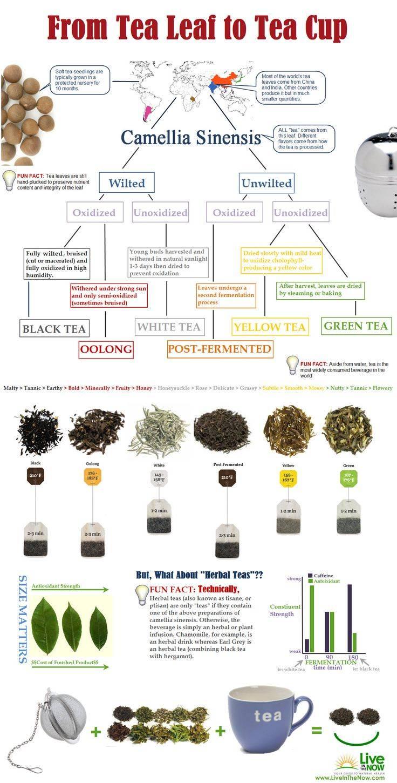 «зеленый»  – синоним полезного. вся правда о зеленом чае