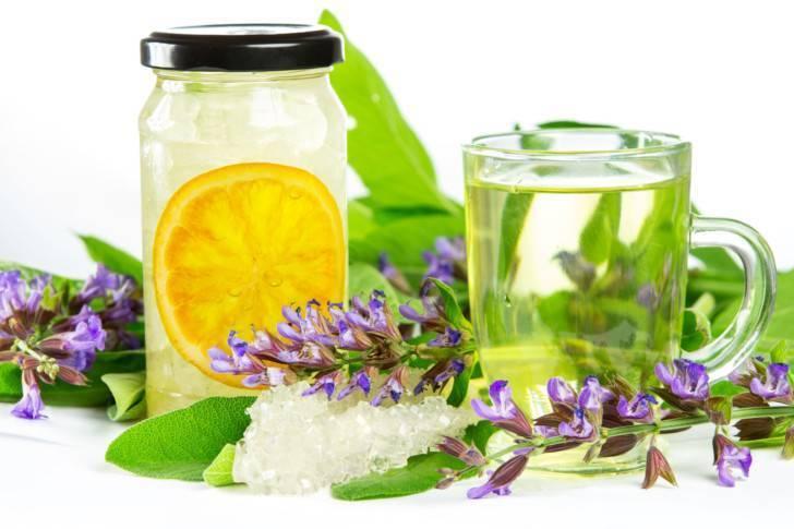 Шалфей и чай из шалфея — польза и возможный вред