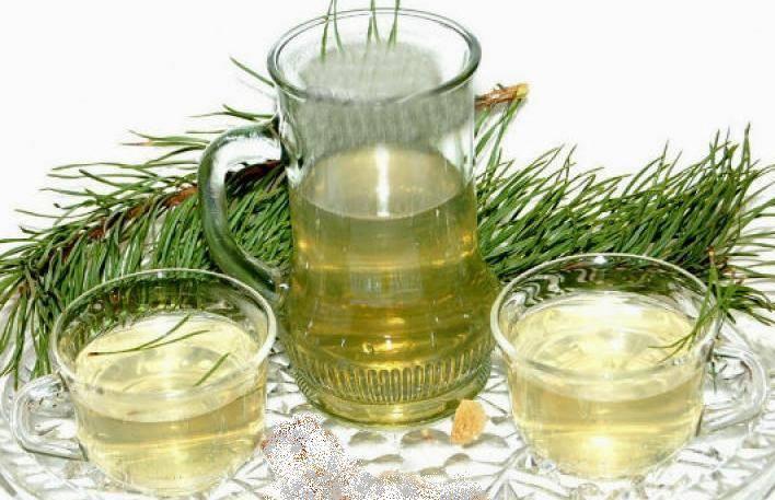 Чай из хвои сосны: польза и вред от применения иголок, правила приготовления и приема