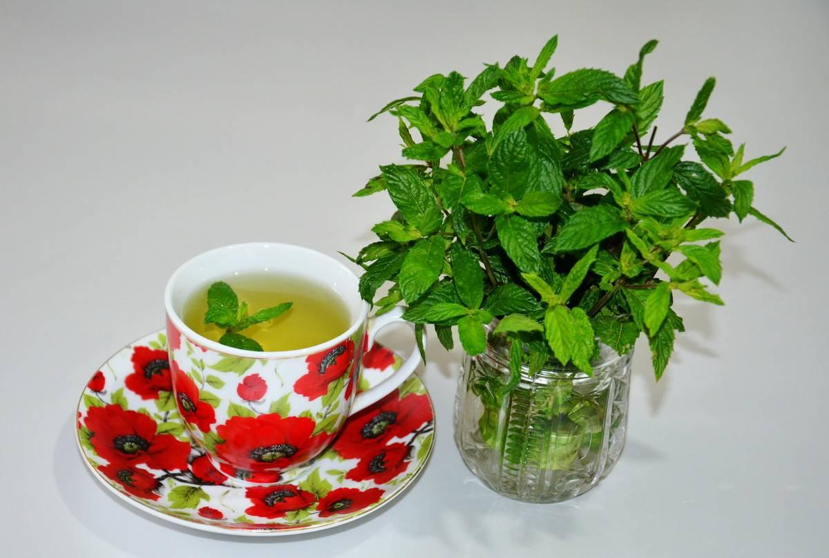 11 полезных свойств чая с мятой и экстрактов