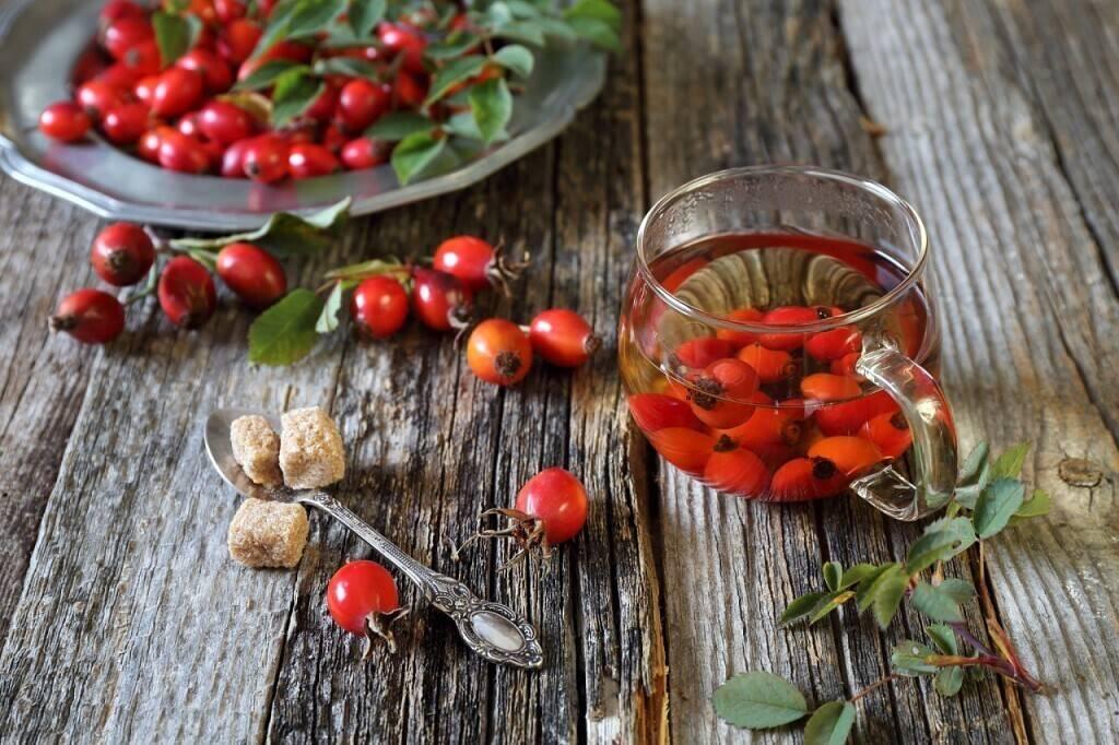 Шиповник - полезные свойства и противопоказания для мужчин или женщин, рецепты лечебного отвара и чая