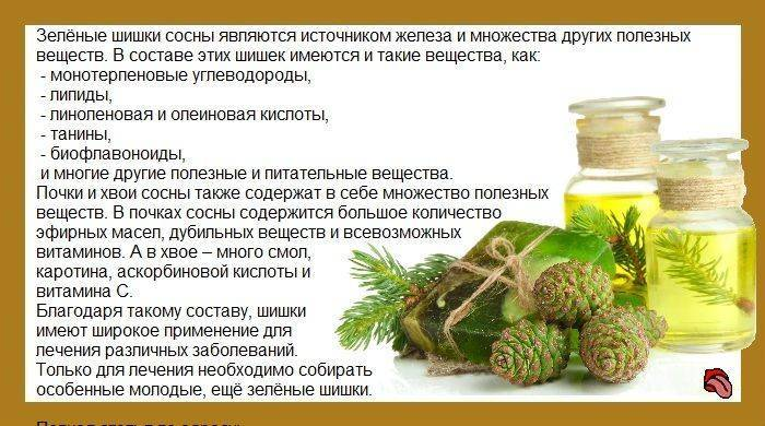 Как приготовить хвойный чай с сосновыми или еловыми иголками