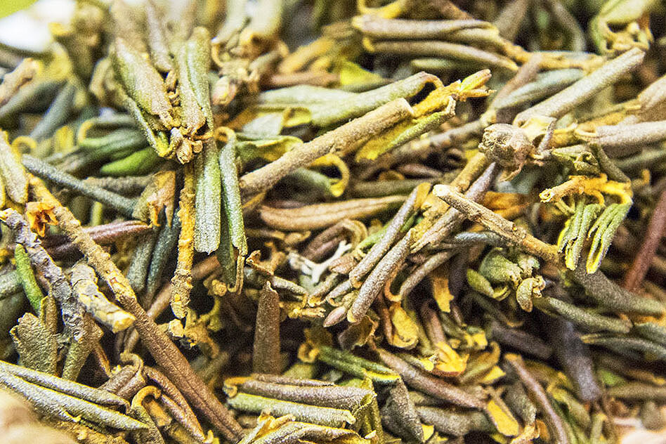 Саган дайля – полезные свойства и противопоказания