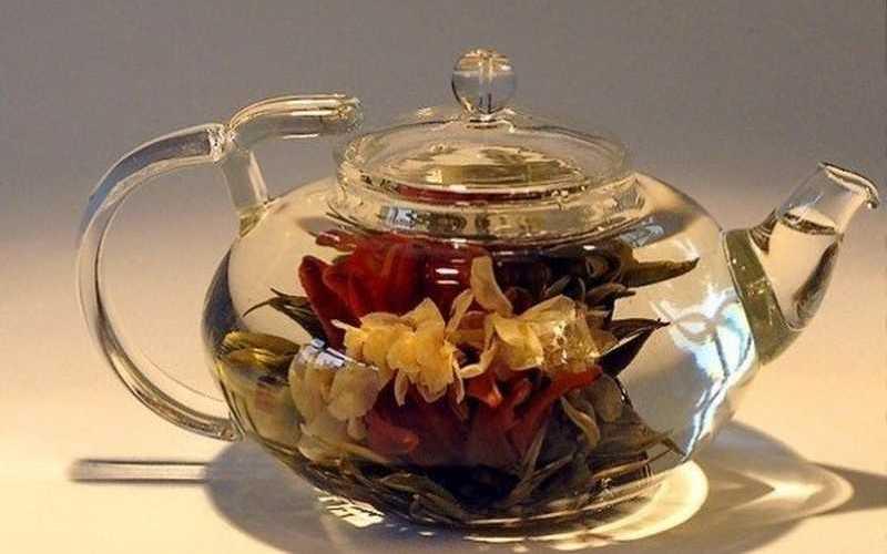 Хризантема овощная — полезные свойства, применение в народной медицине, отвар, начтой и чай из хризантемы, показания и противопоказания.