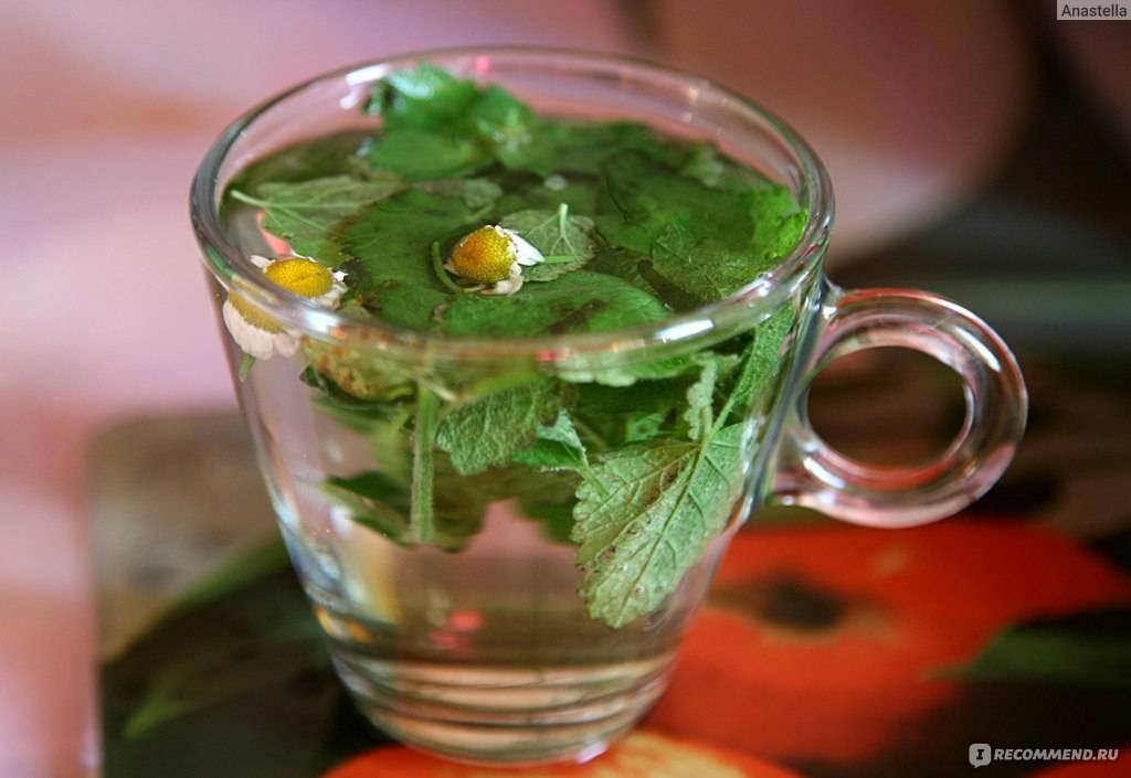 Чай с мятой: польза и вред, рецепты мятного чая, противопоказания