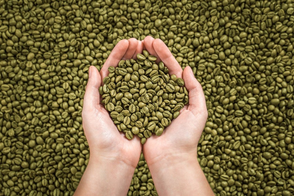 Зеленый кофе для похудения. зеленый кофе польза и вред