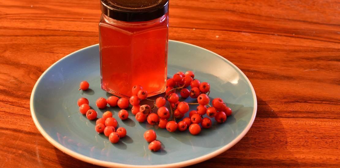 Чай с рябиной: полезные свойства, вред, как правильно заваривать и принимать