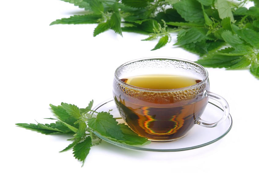 Чай из крапивы: польза и вред, как приготовить крапивный напиток, рецепты и лечебные свойства