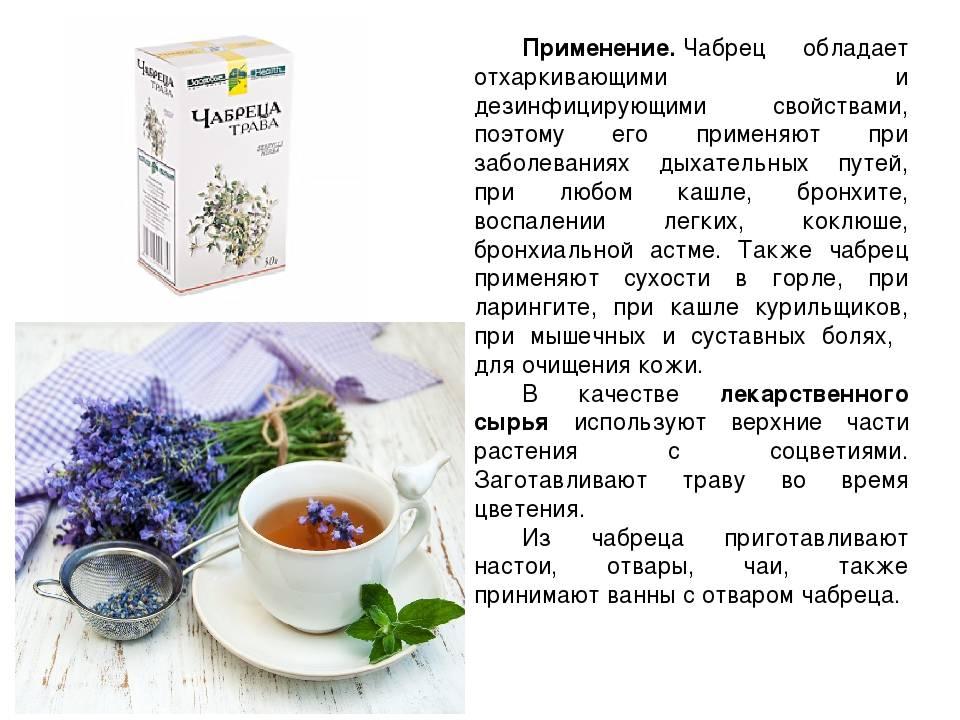 Чай с чабрецом: польза и вред для организма мужчин, женщин, лечебные свойства, применение, рецепты
