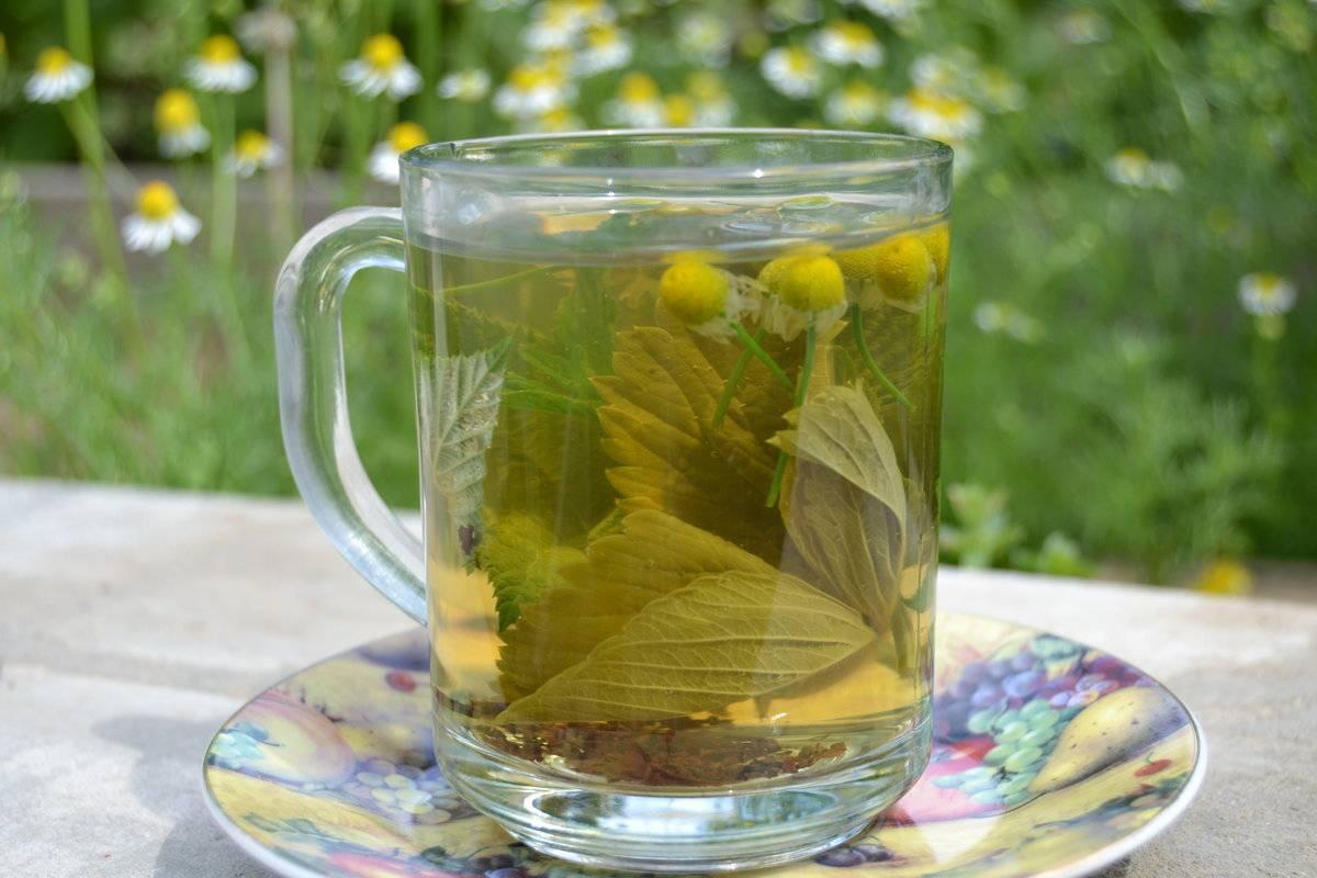 Чай из крапивы: чем полезен, как заваривать