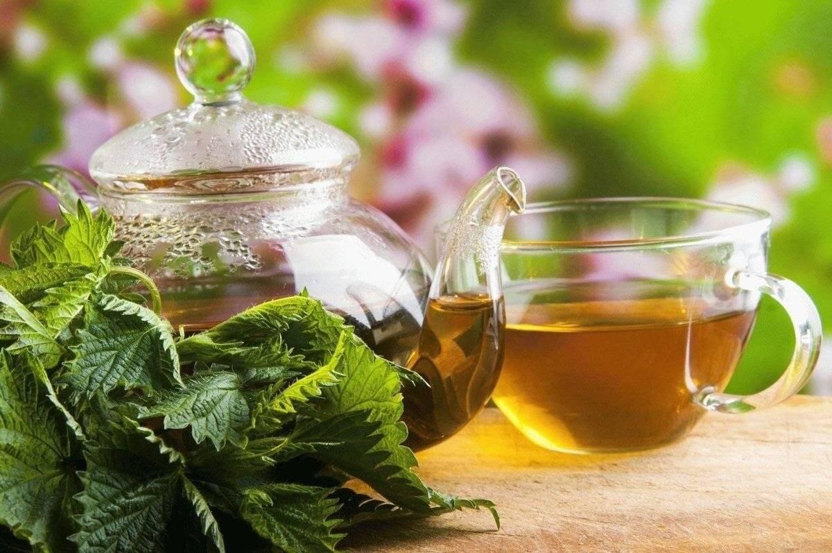 Полезные свойства и вред чая из крапивы | польза и вред