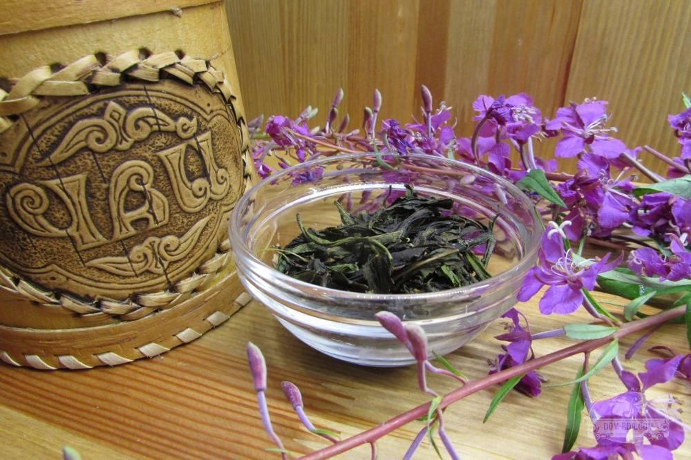Иван-чай для вашего здоровья – как собирать, сушить и правильно заваривать