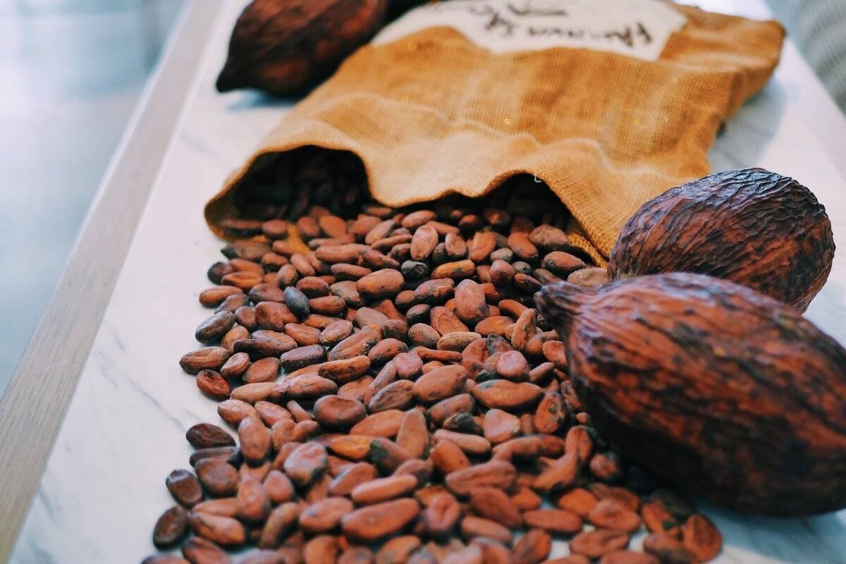 Какао: вред и польза для здоровья, особенности влияния на организм