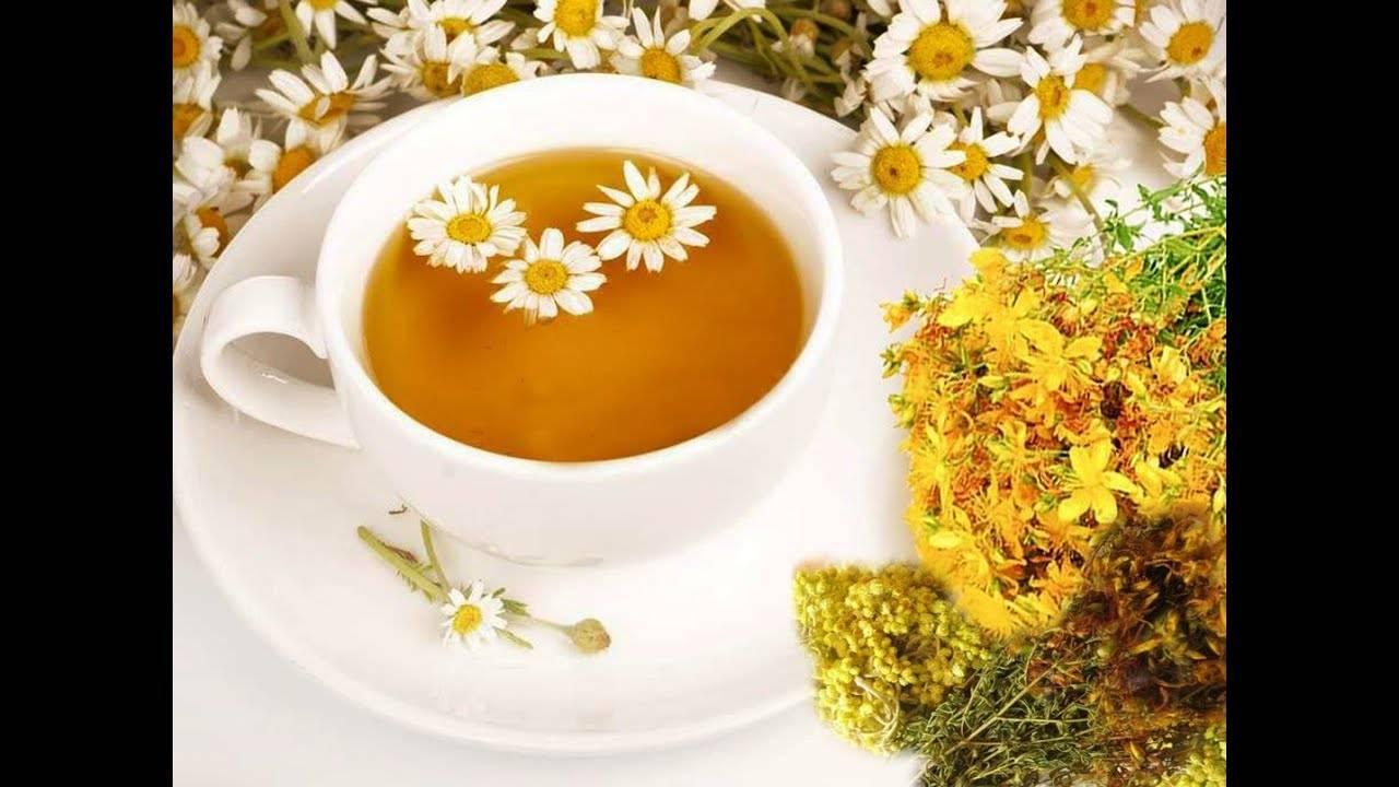 Полезные свойства и противопоказания травяного чая из зверобоя
