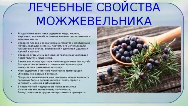 Плоды можжевельника:полезные свойства,применение  в медицине