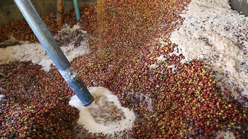 Бразильский кофе: особенности, виды, сорта, известные марки