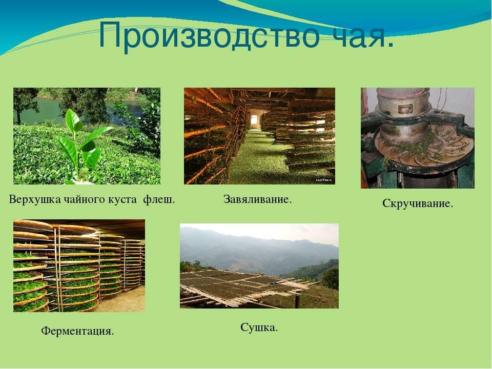 Изготовление чая