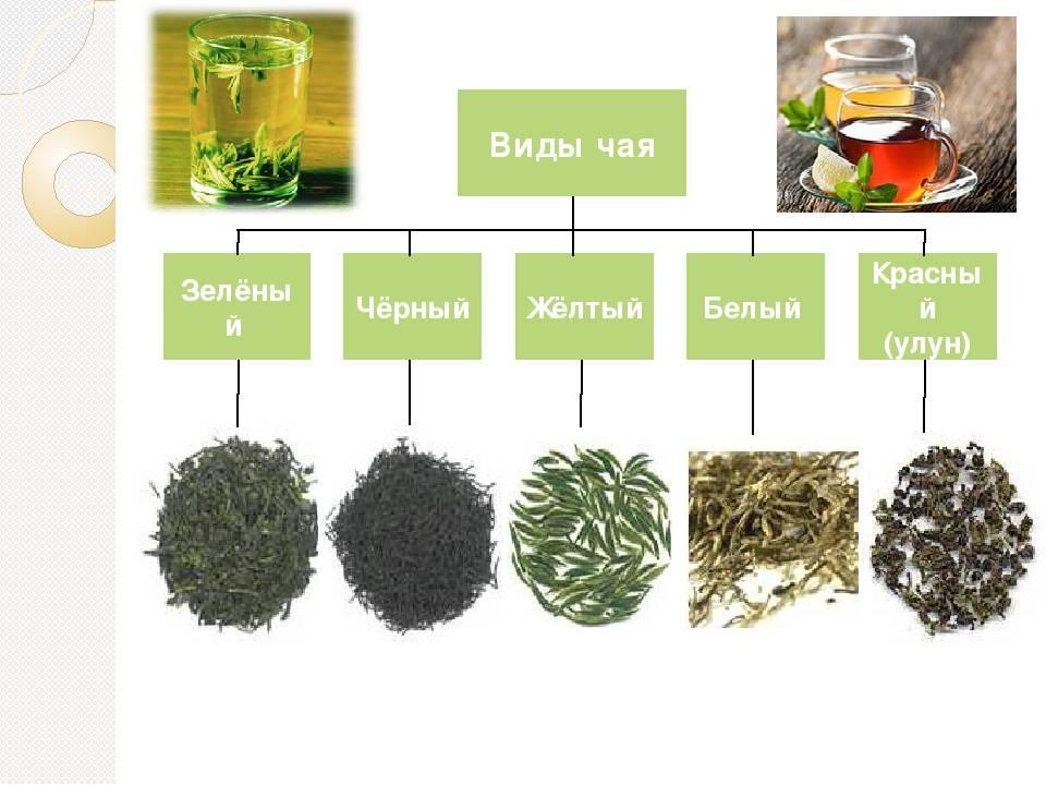 Чем отличается черный чай от зеленого? какой полезнее пить, в чем разница между ними, какой лучше бодрит