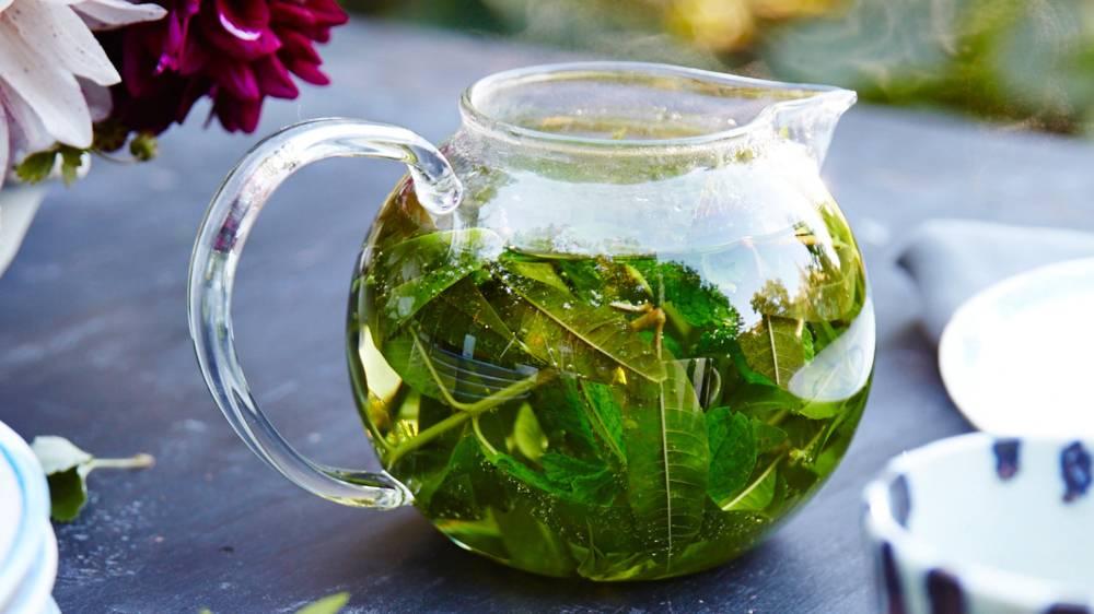 Чай с вербеной: польза и вред, рецепты приготовления