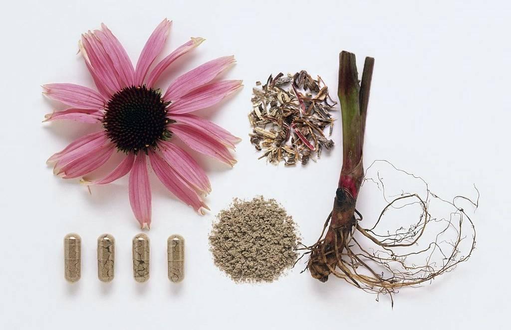 Эхинацея пурпурная: как собирать и сушить лекарственное сырье – сушим эхинацею в домашних условиях » сусеки