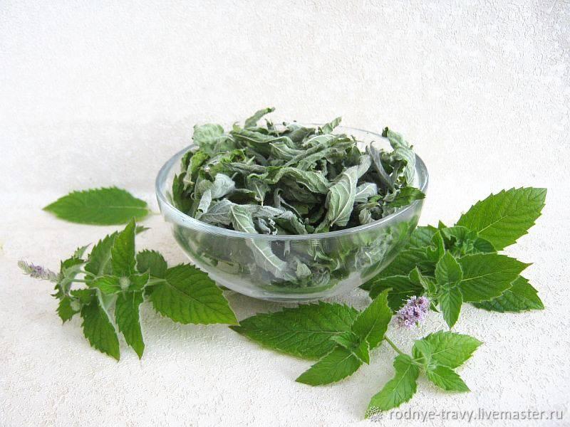 Сбор, хранение и применение сушеной мяты. польза и вред растения