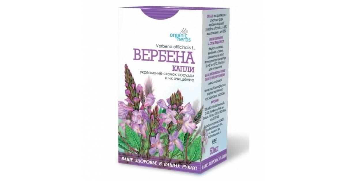 Вербена лекарственная - полезные свойства и применение   книга здоровья