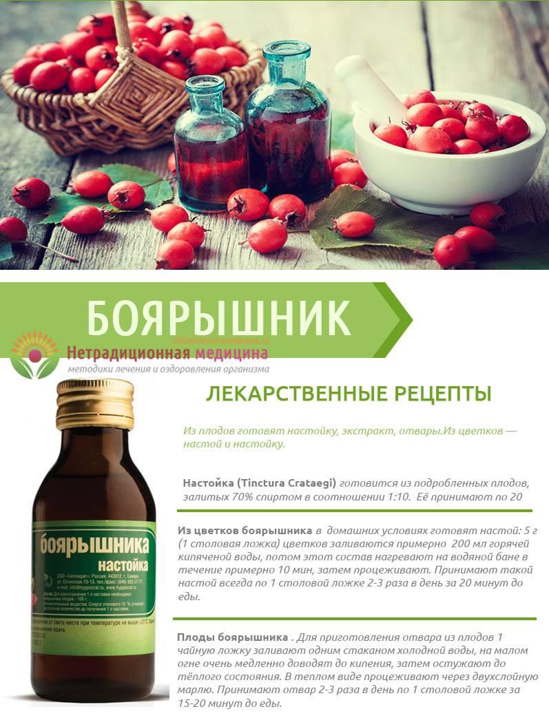 Боярышник – лечебные свойства, состав, применение и рецепты