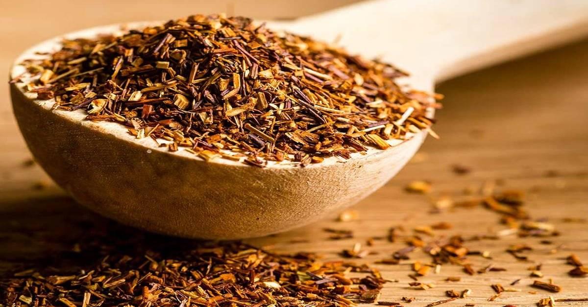 Чай ройбуш - полезные свойства и противопоказания, цена, где купить