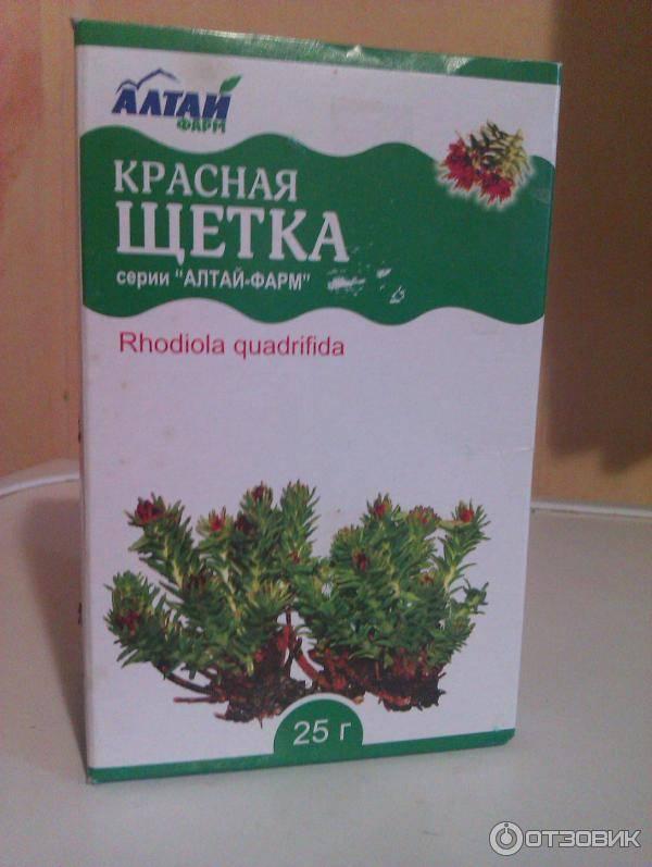 Красная щетка: полезные свойства фиточая