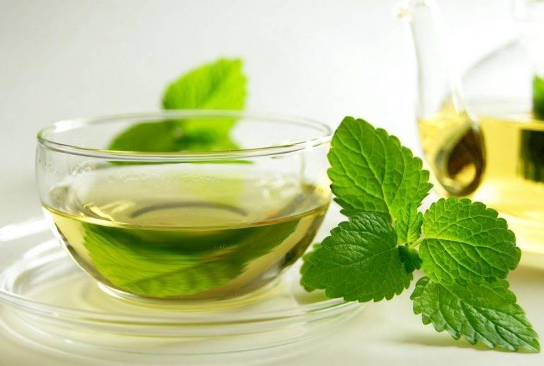 Чай с мелиссой – польза и вред ароматной травы