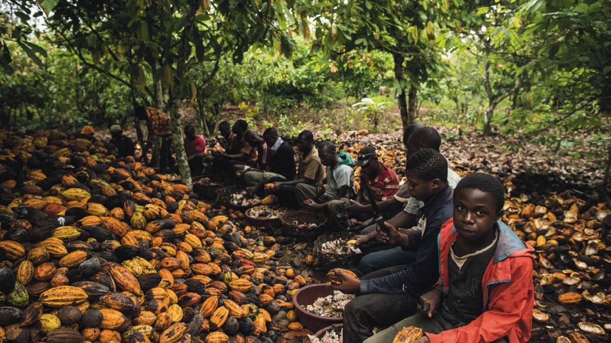 Республика кот-д'ивуар: столица. кот-д'ивуар: информация о стране