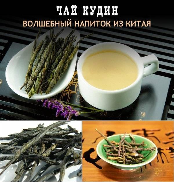 Кудин чай: полезные свойства, противопоказания, советы, фото