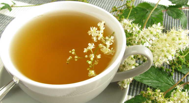 Трава таволга - лечебные свойства и применение в народной медицине