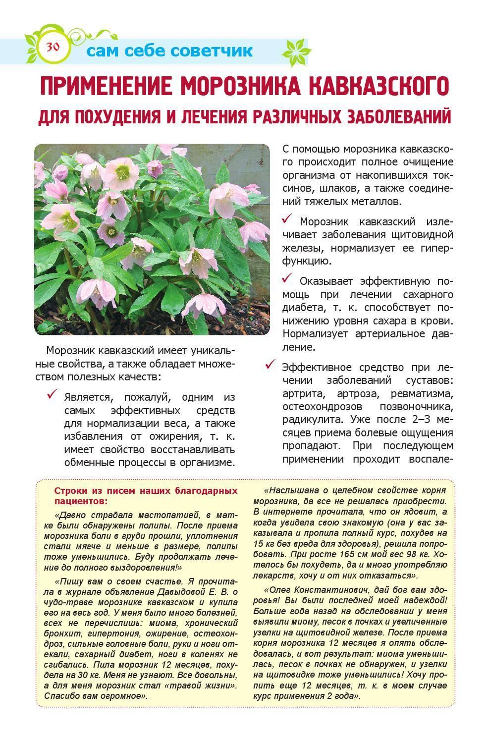 Морозник кавказский (35 фото): описание. где растет трава и как выращивать самостоятельно? посадка и уход за цветами
