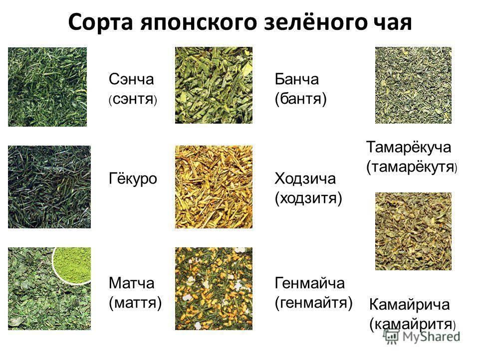 Как заварить ройбуш: различные методы приготовления, особенности, вкусовые качества