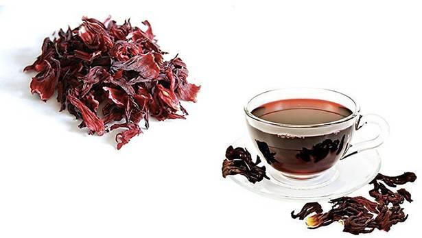 Гибискус: описание цветка, полезные свойства, применение чая, противопоказания