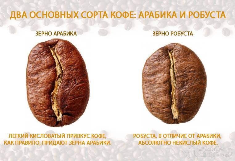 Робуста и арабика: различия, что лучше в кофе этих сортов (описание)