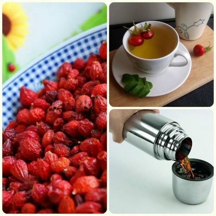 Чай из шиповника: как приготовить полезный напиток