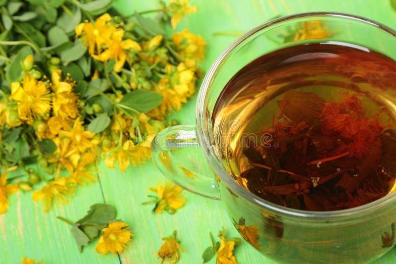 Чай из зверобоя — польза и вред для мужчин и женщин