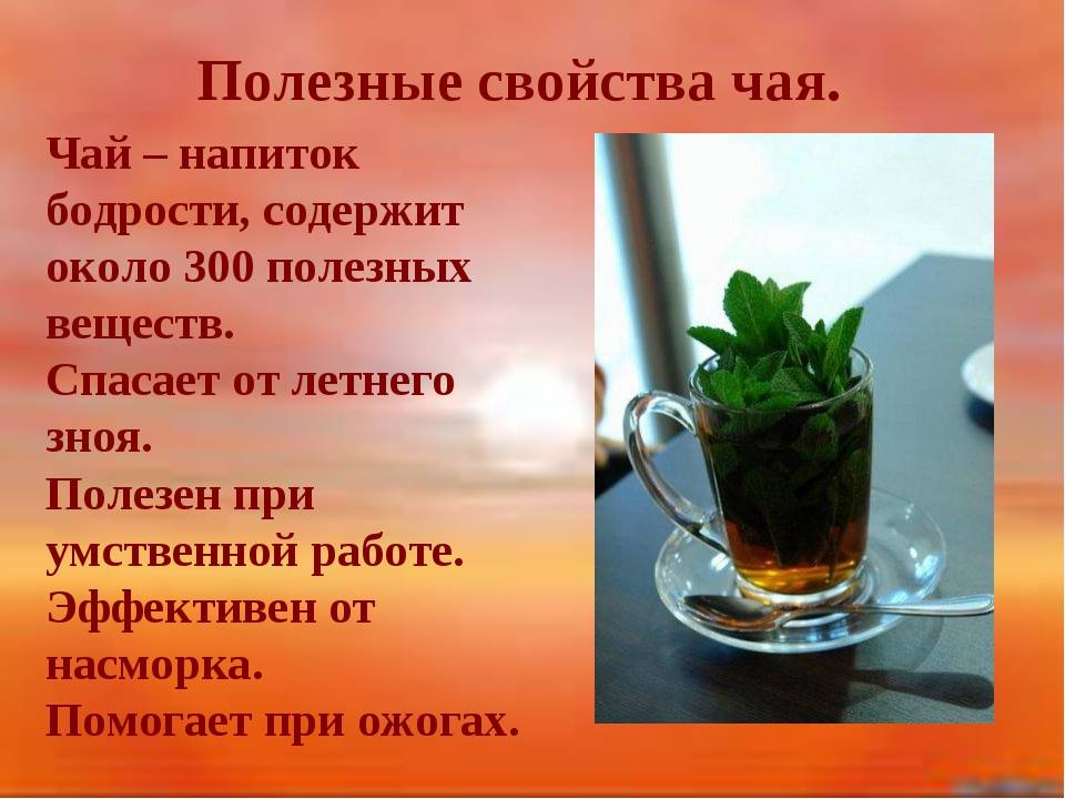 Польза и вред чая кудин: советы врачей