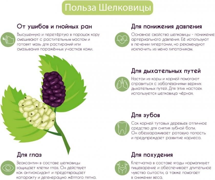 Чем полезны листья шелковицы для мужчин и женщин