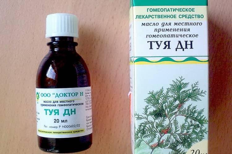 Лечебные свойства шишек туи и применение их в народной медицине