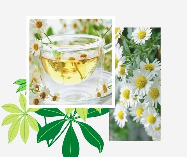 Можно ли пить зеленый чай при беременности, польза и вред напитка
