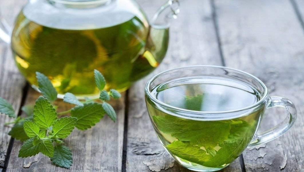 Польза и вред чая из мяты перечной: лечебные свойства для организма, противопоказания, а также что содержится в листьях, как часто пить, можно ли каждый день?